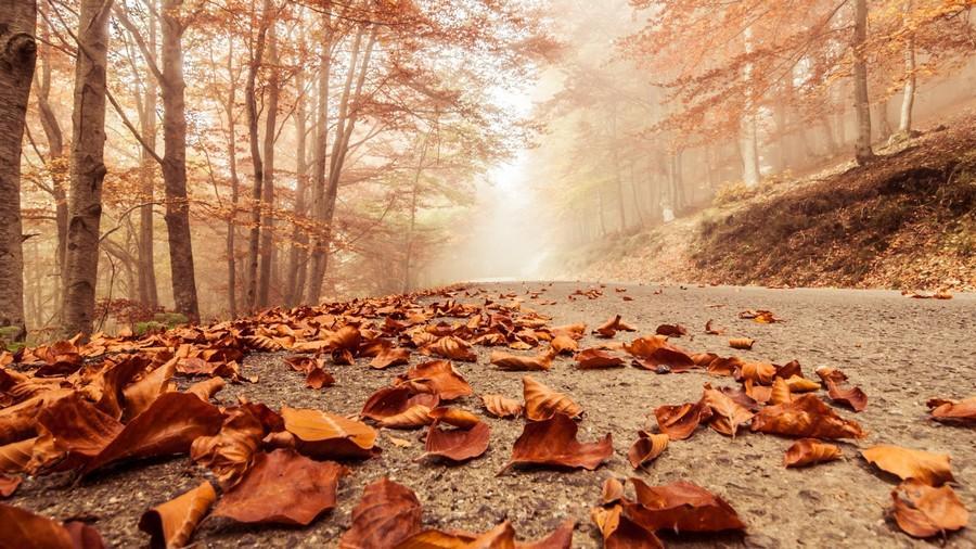 композиция из листьев своими руками