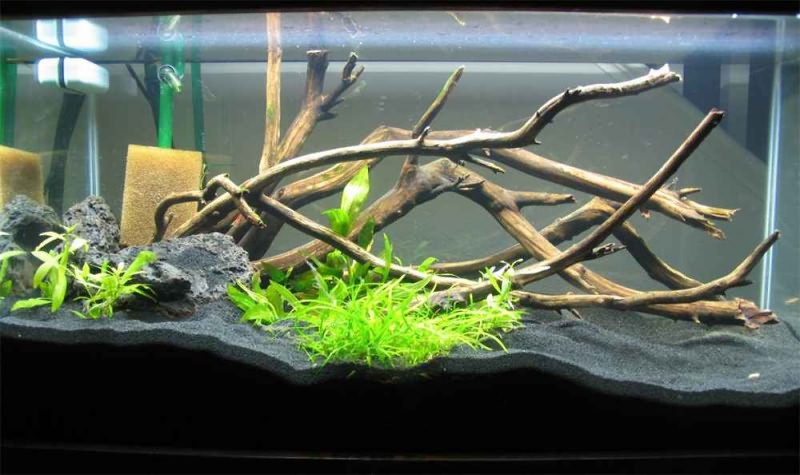оформление аквариума корягами