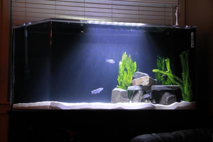 аквариумы оформление японский стиль