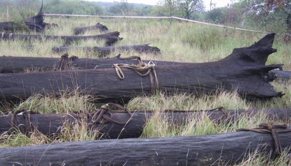Мореный дуб, Bog Oak, элитный материал. мореный дуб, что такое ...