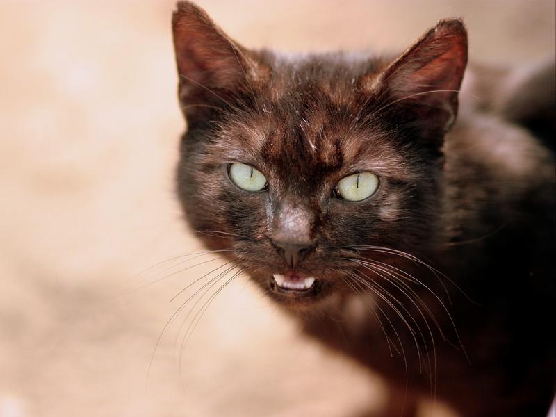 кошка написала на диван убрать запах