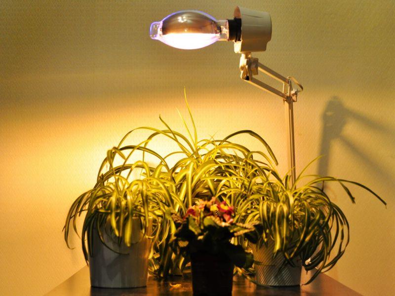 Освещение для растений - фото необычных решений в интерьере