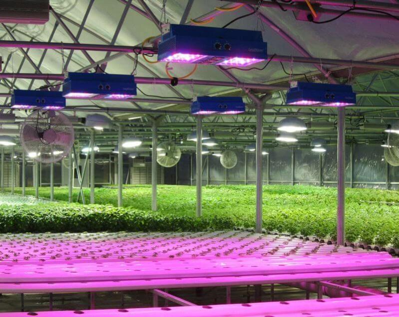 Лампы для растений. Как правильный свет помогает растениям