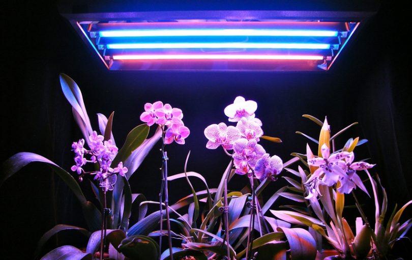 подсветка для растений своими руками
