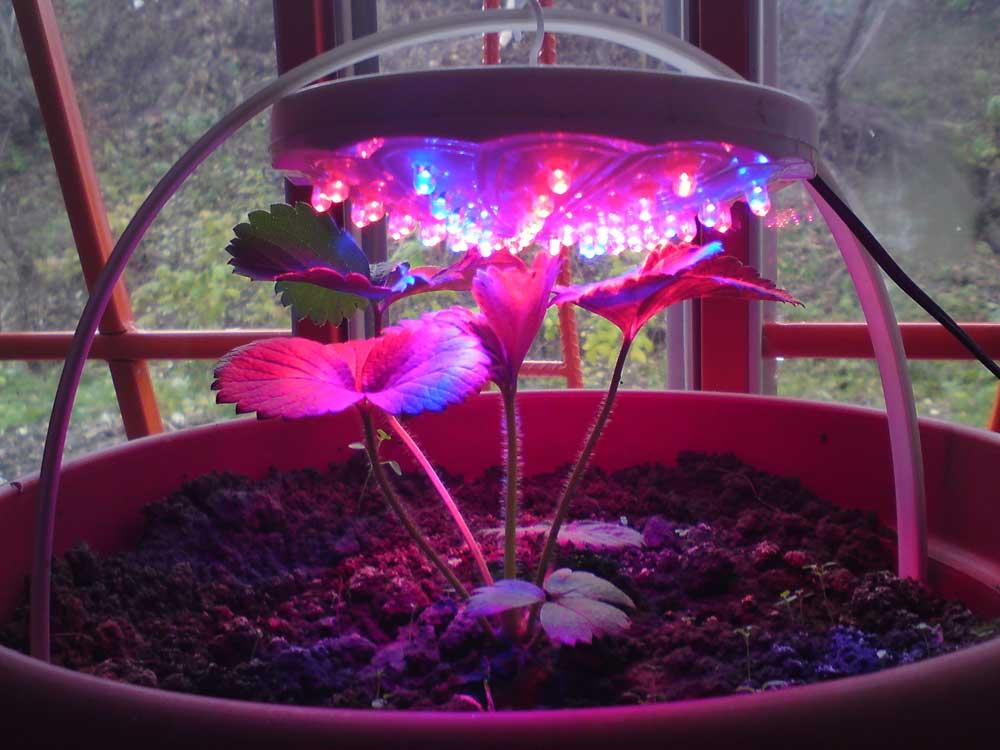 лампа для цветов комнатных (главный ключ)