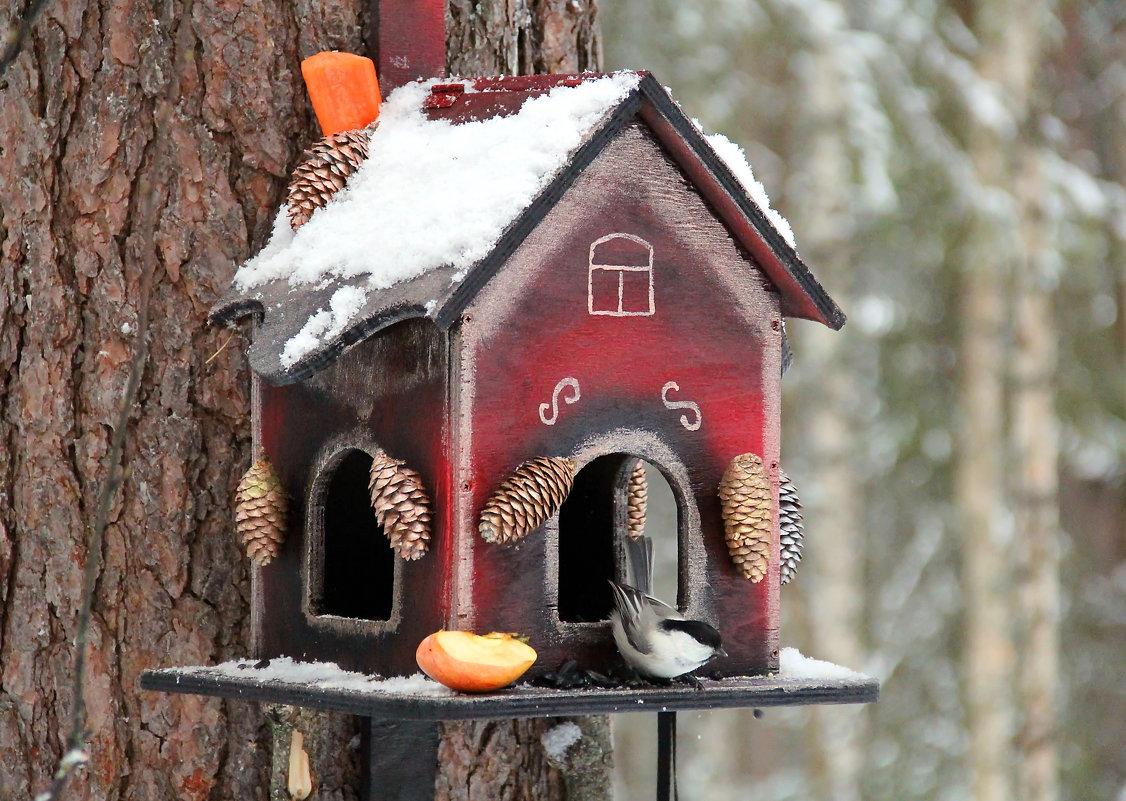 необычные кормушки для птиц своими руками фото любят то