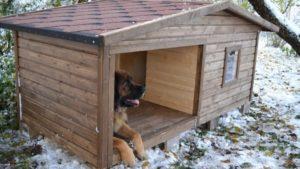 Как утеплить собачью будку снаружи и внутри, фото