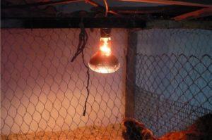Красная лампа для курятника: как использовать, где установить, отзывы