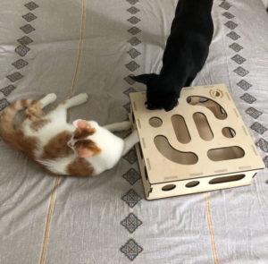 Домик из фанеры для кота своими руками: чертежи, фото и размеры