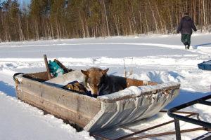 Самодельные сани для снегохода своими руками: фото, чертежи, размеры, видео