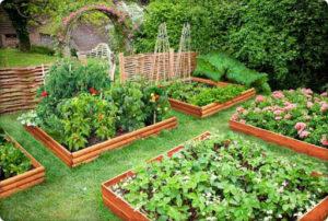 Грядка для помидоров своими руками в открытом грунте и в теплице + фото