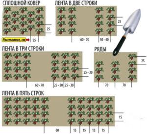Теплые грядки для клубники: как сделать своими руками, фото, размеры и посадка