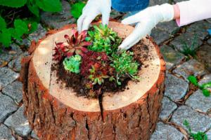 Клумбы из пеньков своими руками: фото, как сделать из дерева, спилов, бревен, сочетание с камнями