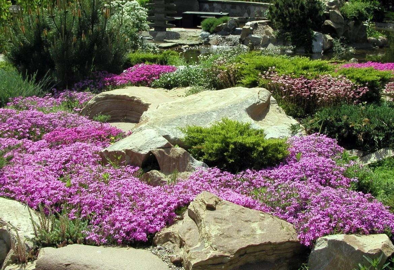 ими можно какие цветы посадить в альпийскую горку фото вас