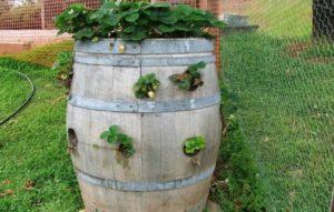Вертикальные грядки на даче своими руками для овощей и зелени: фото, как сделать из дерева, поддонов