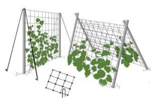 Опоры для огурцов в открытом грунте и теплице: фото, видео