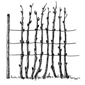 Шпалеры для малины своими руками: чертежи, пошаговая инструкция