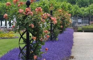 Опоры для плетистых роз своими руками: фото, виды