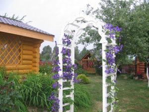 Опоры для клематисов в саду: фото в ландшафтном дизайне, подвязка