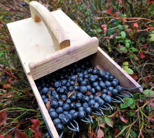Как сделать самодельный комбайн для сбора ягод