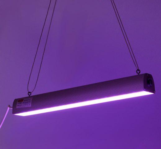 Какие лампы лучше выбрать для подсветки рассады