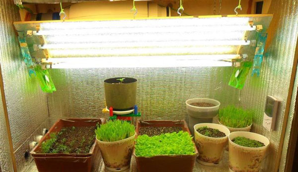 Как сделать лампы для подсветки рассады в домашних условиях